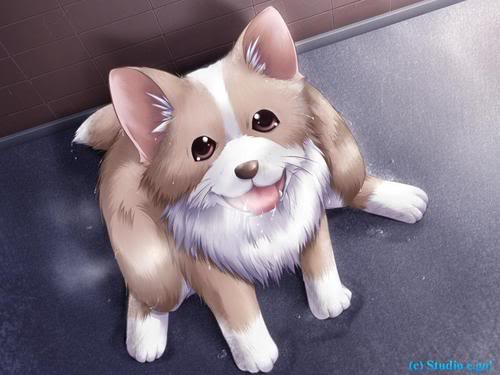 Hokage's offfice Puppy