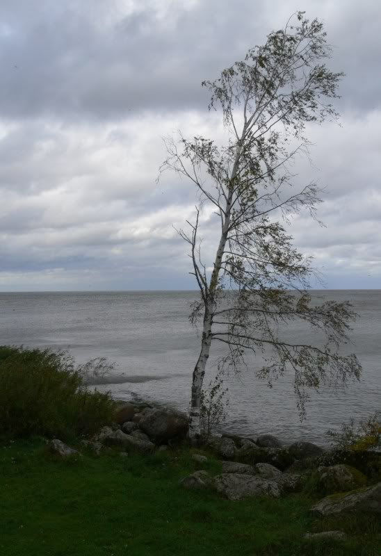 Robin`s South-Estonia trip (and Caysa's pics following too) P1390718