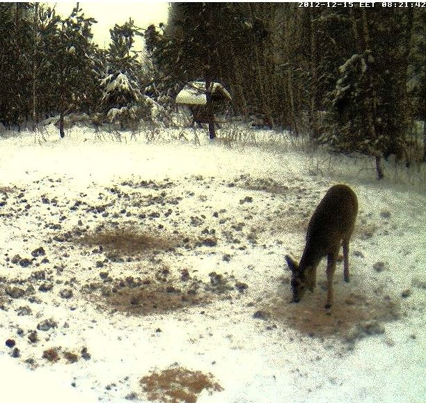 Boars cam, winter 2012 - 2013 - Page 4 Kits-3_zps018673ac