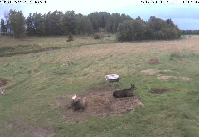 Wild Pig Camera Lovers/ ADDRESS CHANGED TO SWEDISH STREAMING CAM - Page 17 Pdrad