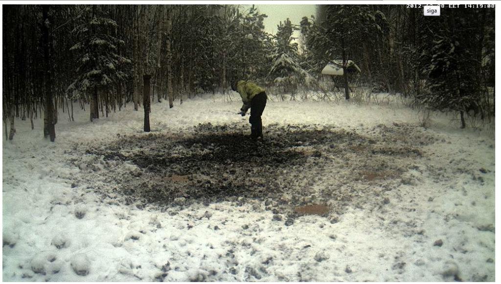 Boars cam, winter 2012 - 2013 Siga-1