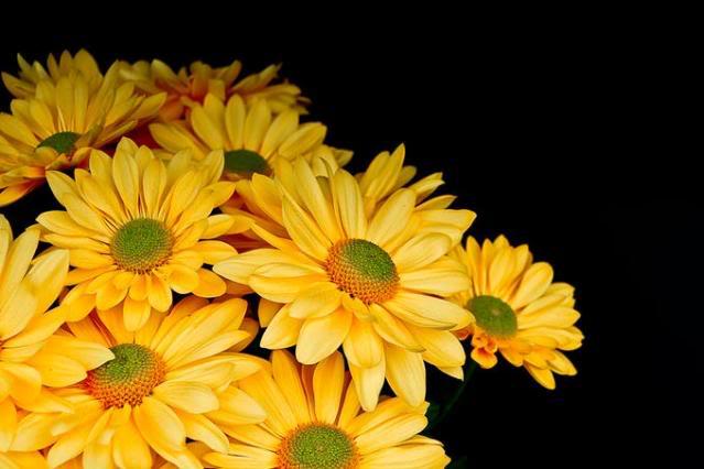 Fotografije cvijeća - Page 15 9782463-md