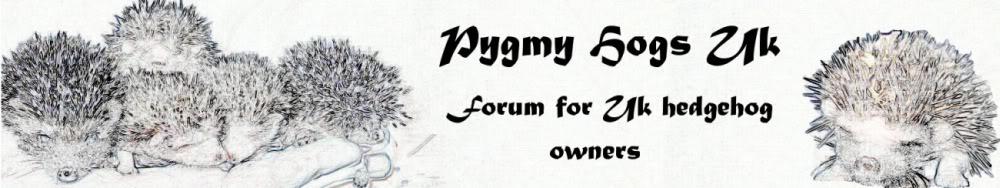 Pygmy Hogs UK - African Pygmy Hedgehog Forum - Portal Z