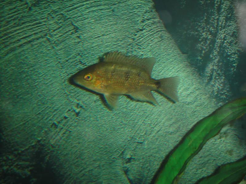 actualizando mis peces con fotos DSC07340