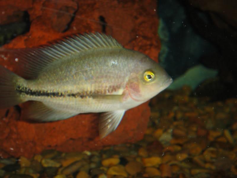 actualizando mis peces con fotos DSC07351