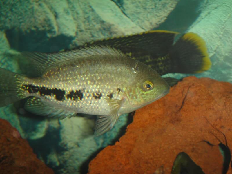 actualizando mis peces con fotos DSC07353