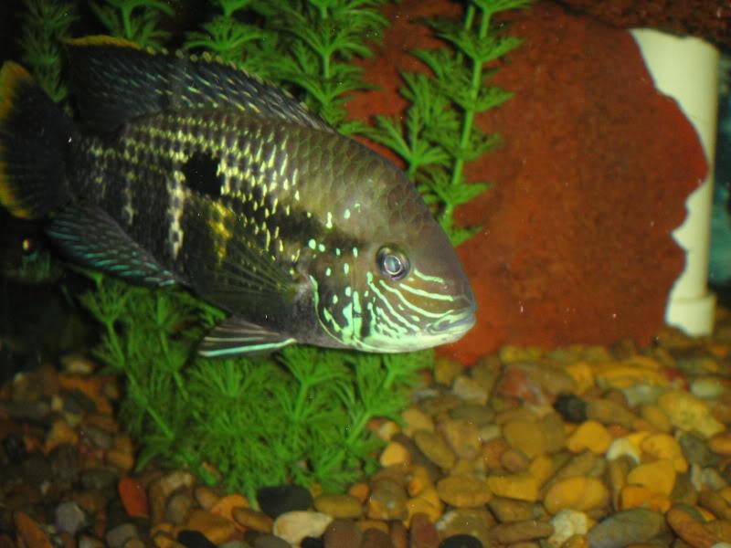 actualizando mis peces con fotos DSC07449