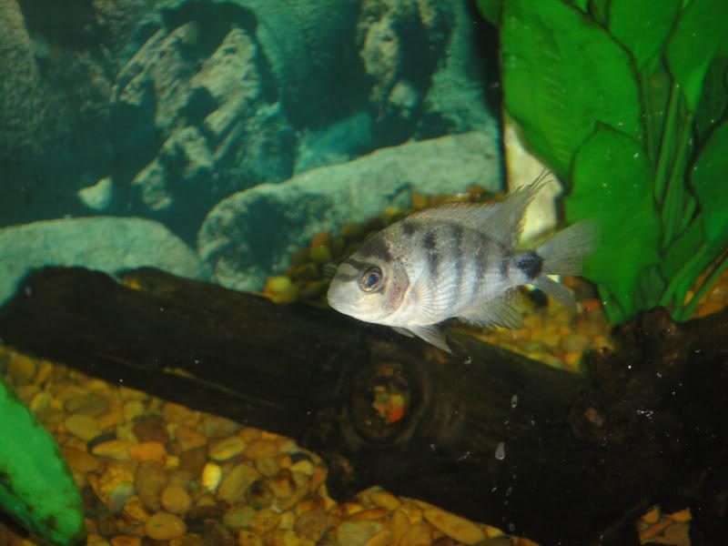 actualizando mis peces con fotos DSC07470