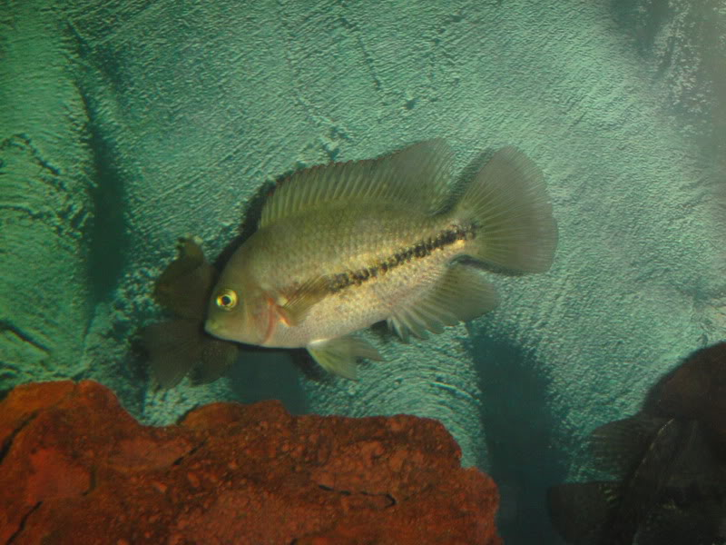 actualizando mis peces con fotos DSC07476