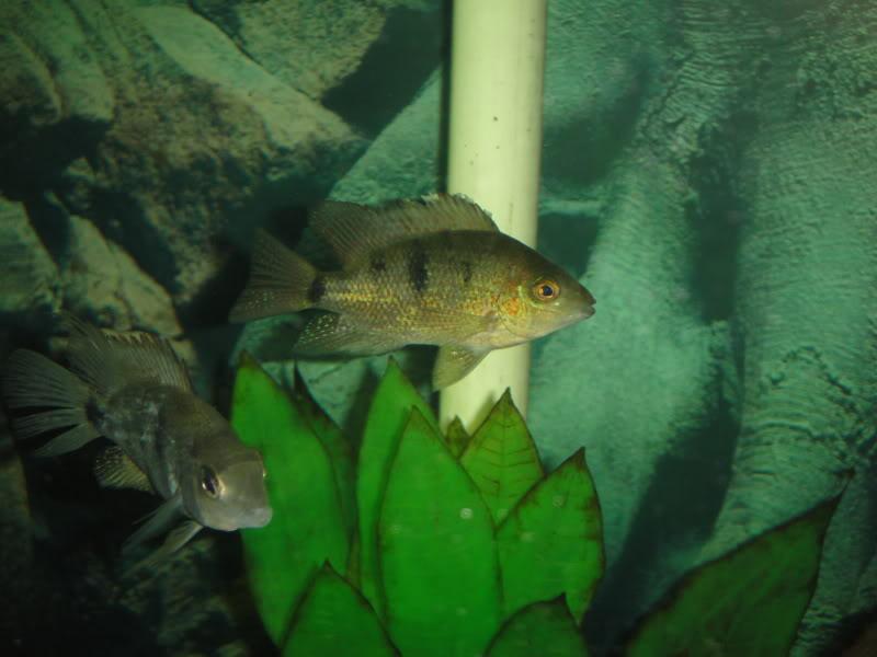 actualizando mis peces con fotos DSC07522