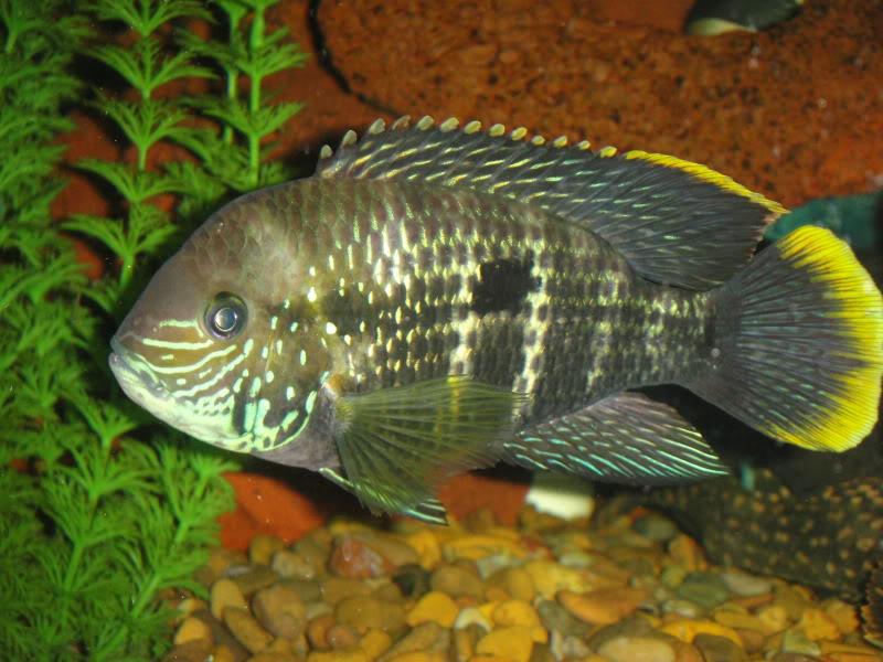 actualizando mis peces con fotos DSC07526