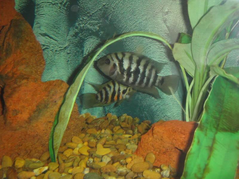 actualizando mis peces con fotos DSC07570