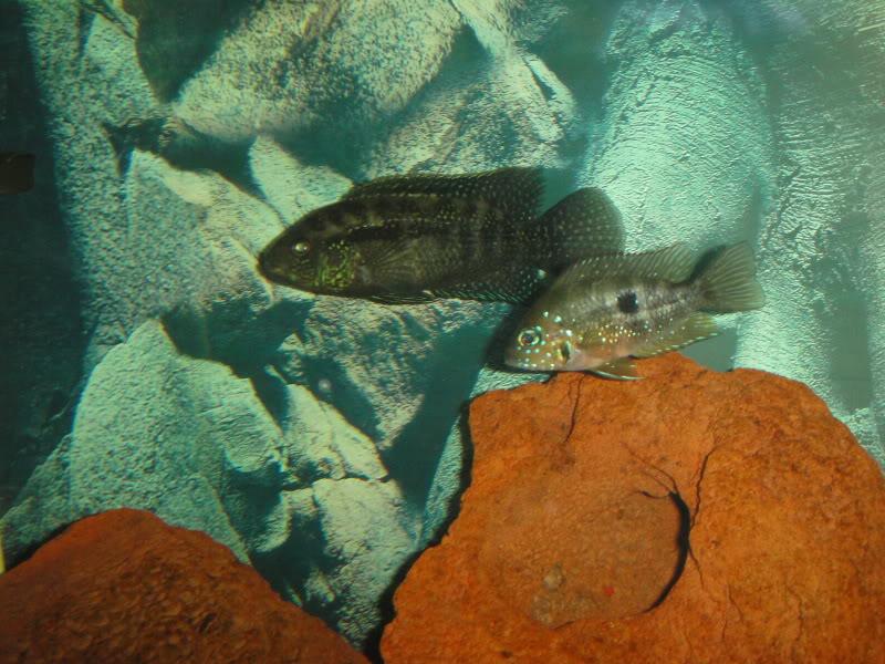 actualizando mis peces con fotos DSC07645