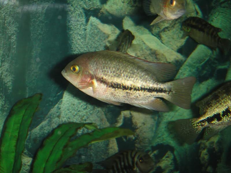 actualizando mis peces con fotos DSC07646
