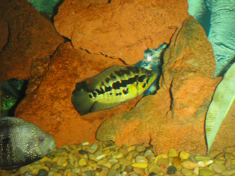 actualizando mis peces con fotos DSC07700