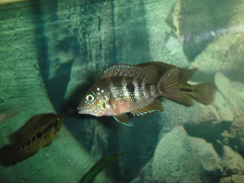 actualizando mis peces con fotos DSC07714