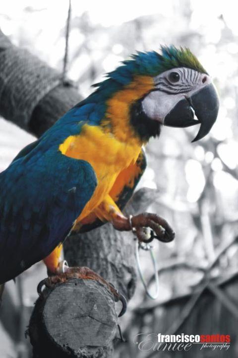birdie.. Parrot