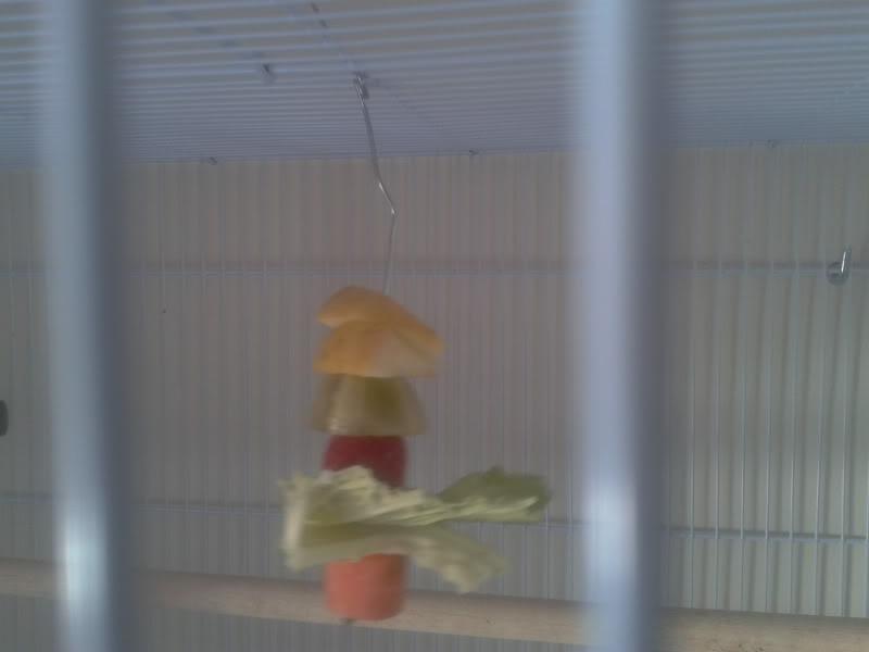Tu agaporni no come verduras, ni fruta. ?¿ 2012-02-12131701