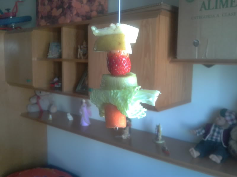 Tu agaporni no come verduras, ni fruta. ?¿ 2012-02-12131942