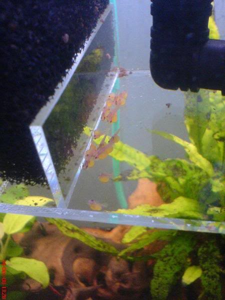 Pics of my L182 and L144 fry Wigglers1