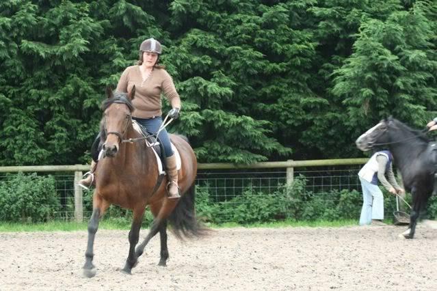 happy horses Ho