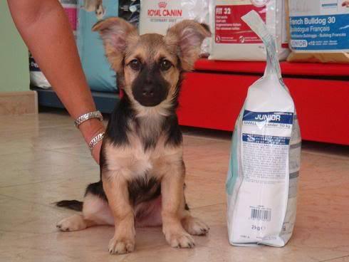 Bombom, perrito de 5 meses tamaño pequeño Almeria Bombon2