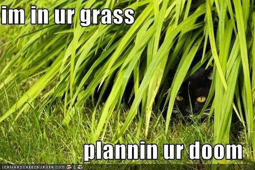 LOL CATZ! Funny-pictures-cat-plans-your-doom