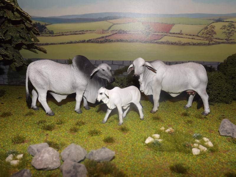 My collecta cattle new photos added november 30th DSCF5441