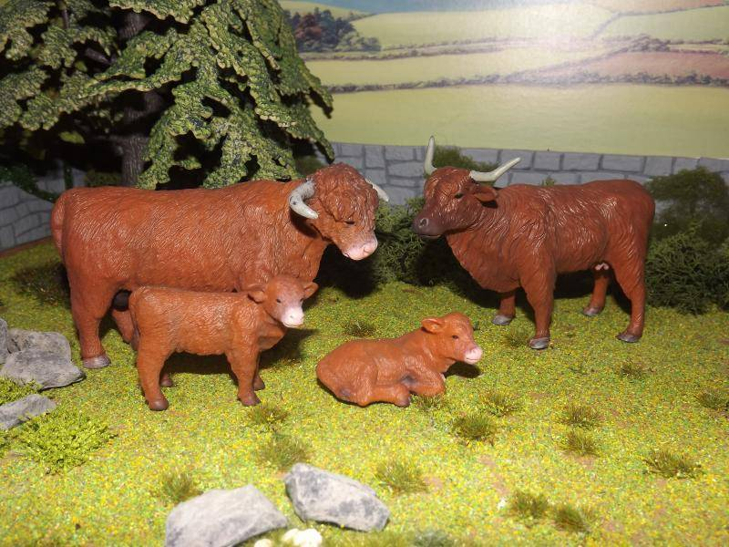 My collecta cattle new photos added november 30th DSCF7032