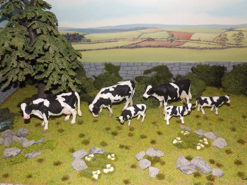 My collecta cattle new photos added november 30th DSCF7231
