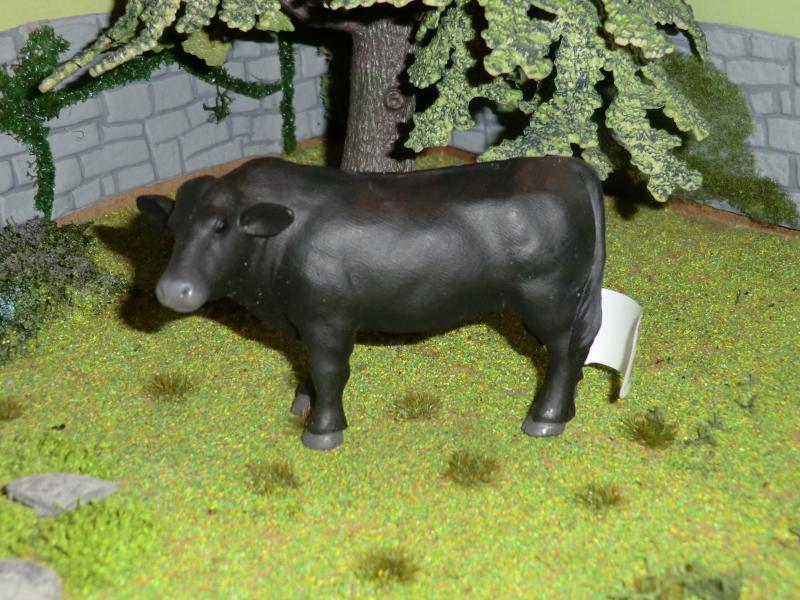 My first battat Cattle CIMG4600