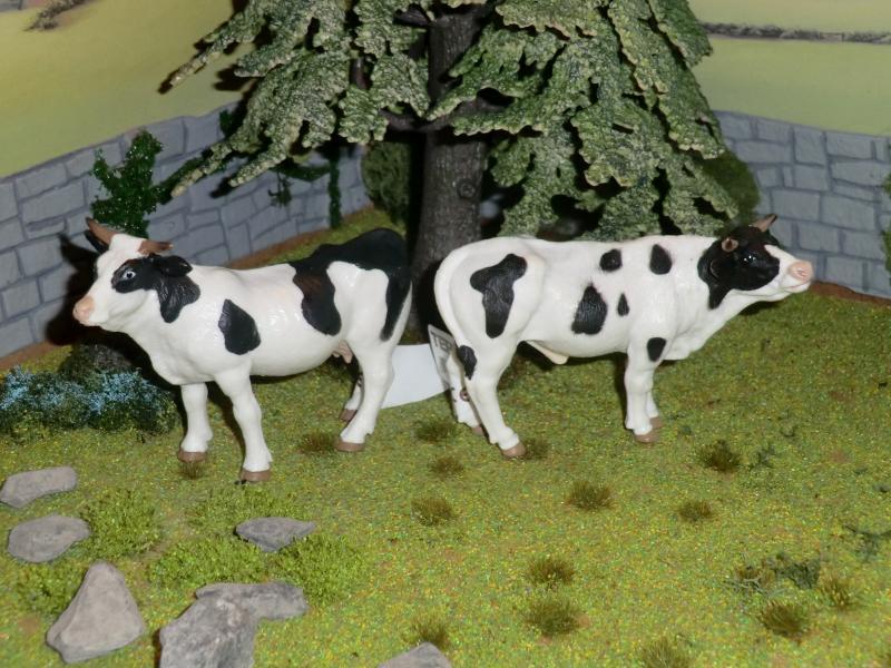 My first battat Cattle CIMG4603