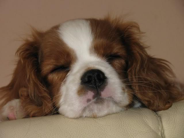 Slika koja opisuje vase trenutno raspolozenje Spavam