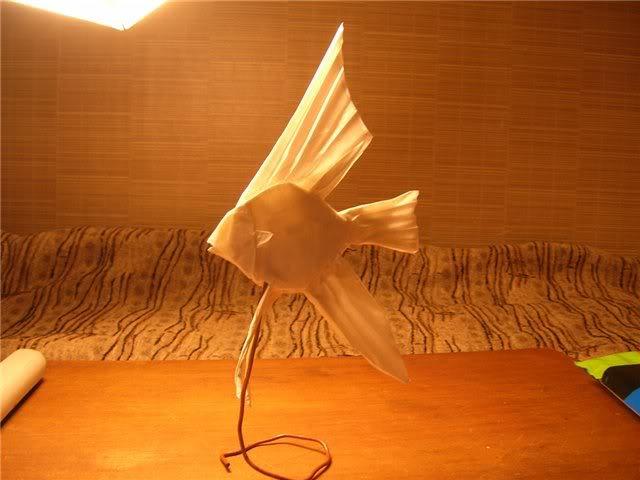 Angel fish 22