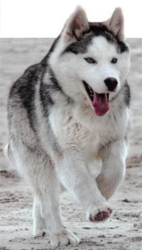 Кучиња - Page 2 Haska_1