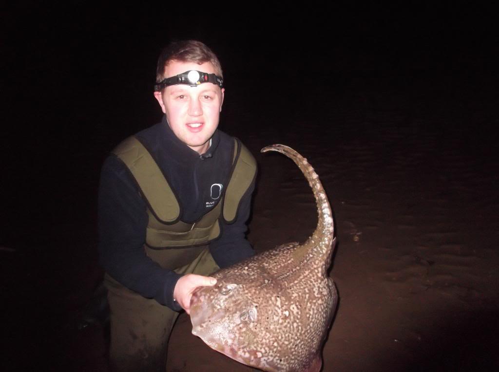 thornback ray Fish2k13008_zps174b3bb7