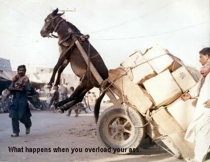 kuda kok diangkat ama beban?? 1_HeavyAss