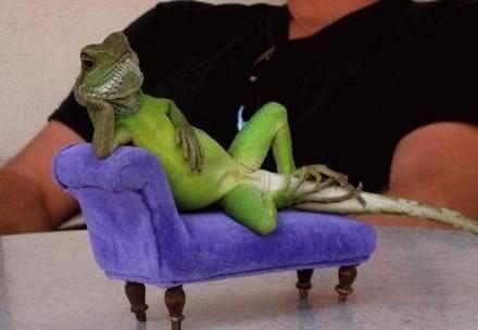 binatang apa nih...tolong pendapat na 1_funny_pictures_Lizard_s_Just_Chil
