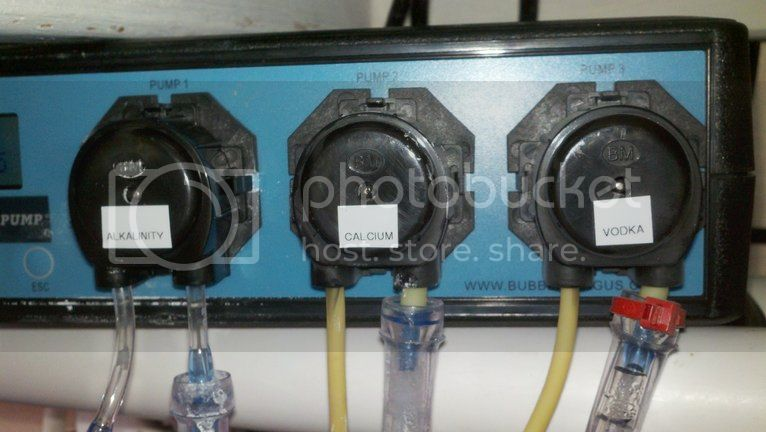 Replacing pump hoses on the Bubble Magus doser Photobucket-7025-1334112412079