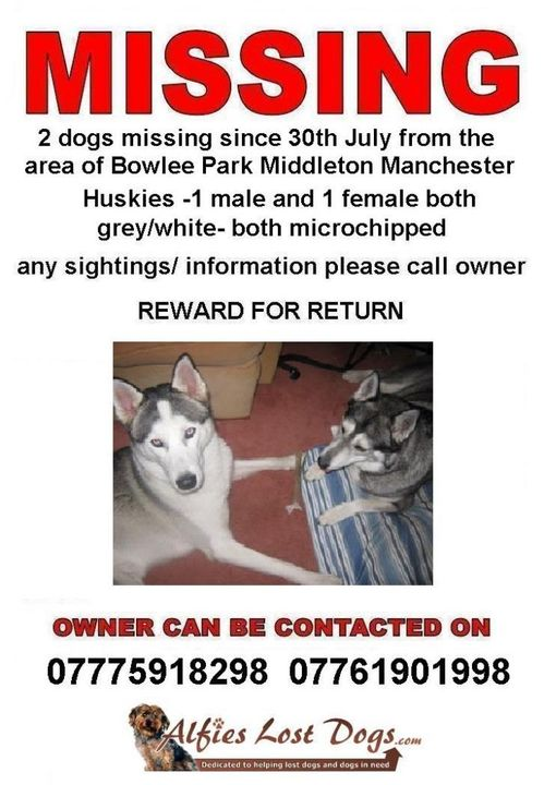 missing huskies - manchester  278888_10150402271159937_745394936_10513377_6932612_o