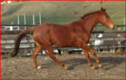 4 sale Canter