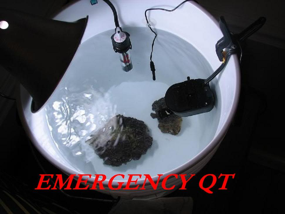 Why are my Zoanthids closed? EmergencyQT
