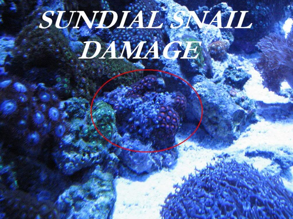 Why are my Zoanthids closed? Sundialdamage