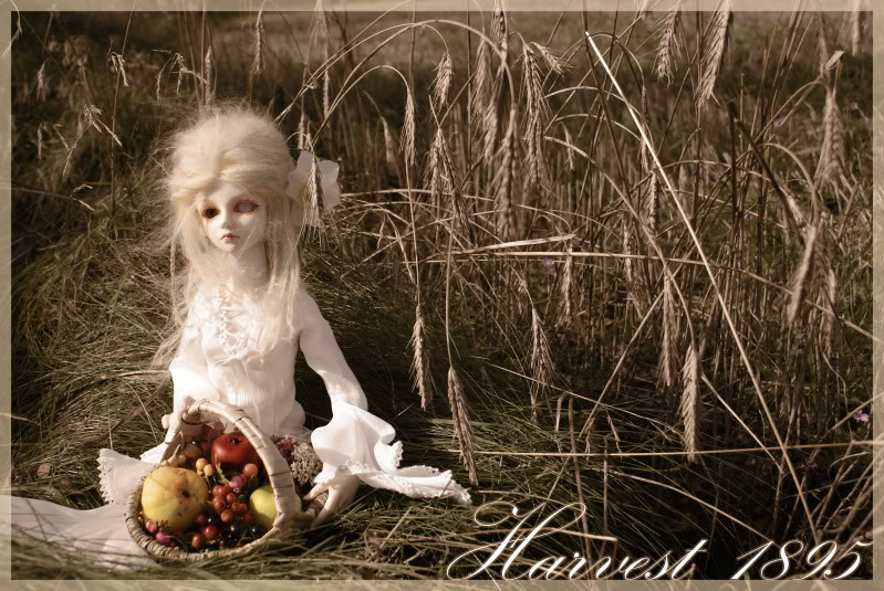 Fototema: Vinderne! Harvest