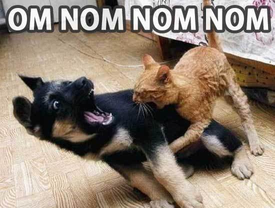 Bump to 100 pages D: Part 2! - Page 6 Om-nom-nom-nom-cat-bites-dog