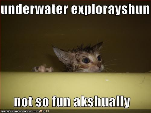 Lolcats (Well, Lolanimals) Funny-pictures-cat-decides-underwat