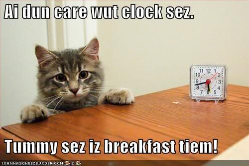 Lolcats (Well, Lolanimals) Funny-pictures-cat-says-that-it-is-