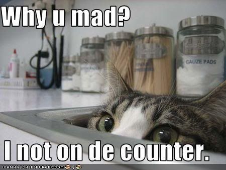 Lolcats (Well, Lolanimals) Funny-pictures-cat-wonders-why-you-