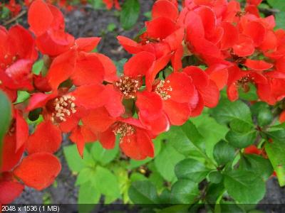 """Фотоконкурс """"Красный"""" Ca824d53b6030d997bad16e6ed3b9817"""