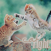 Chall nº11 - icon- Gatos CatFightcopia